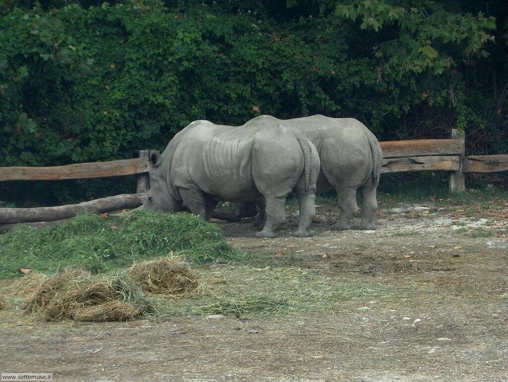Foto di Rinoceronti 008