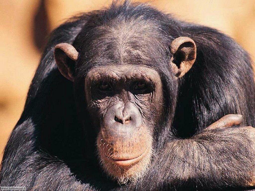 Foto di Scimmie 004