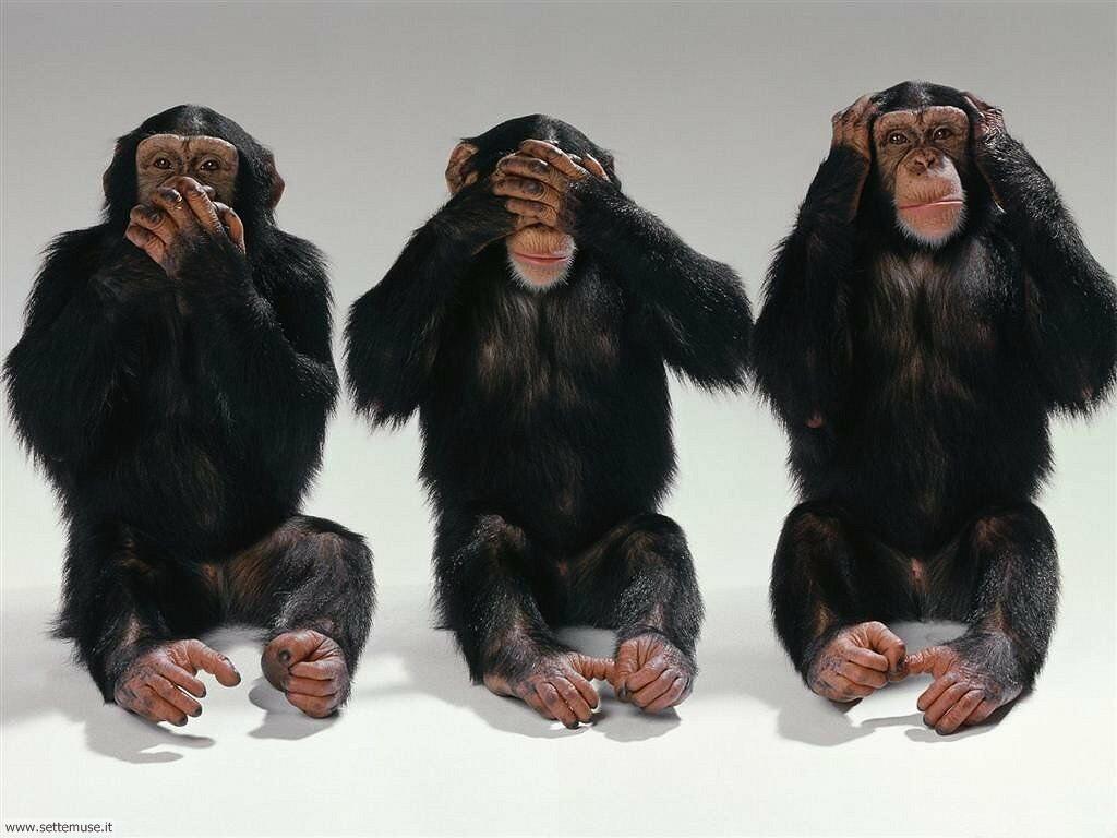 Foto di Scimmie non vedo non sento non parlo