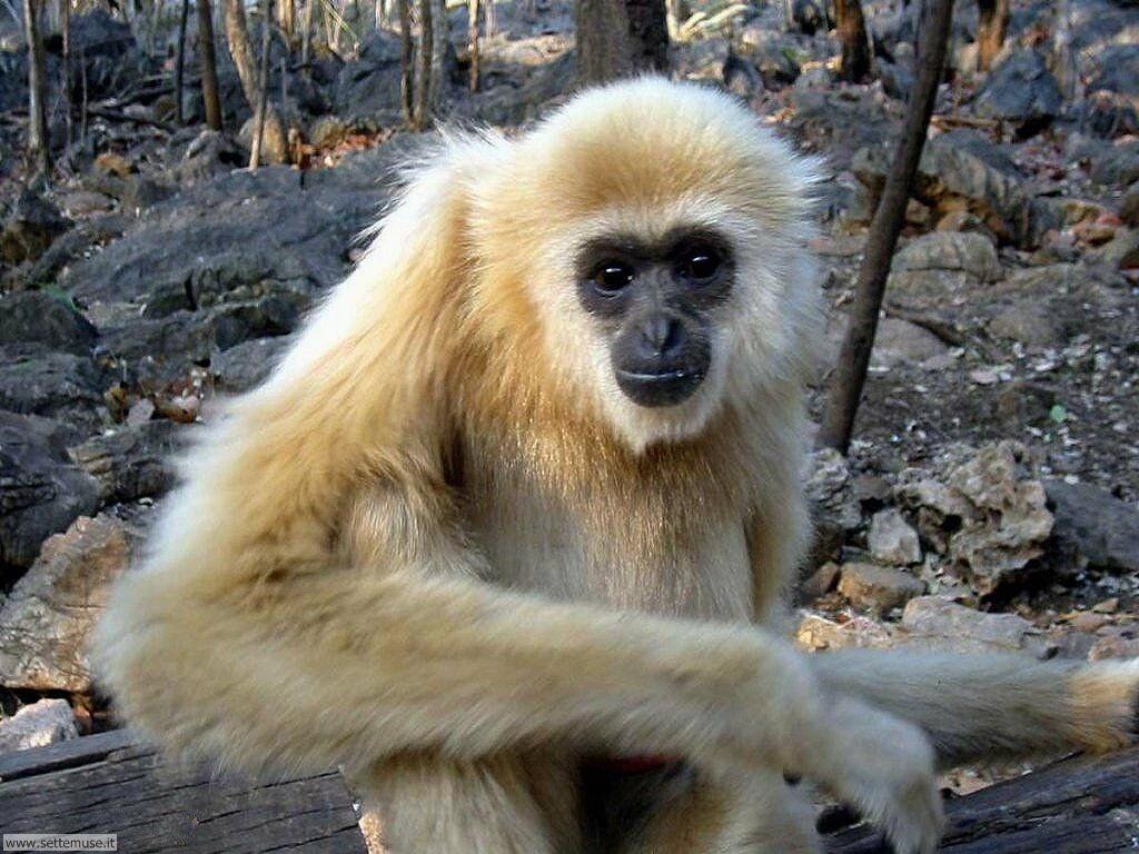 Foto di Scimmie 019