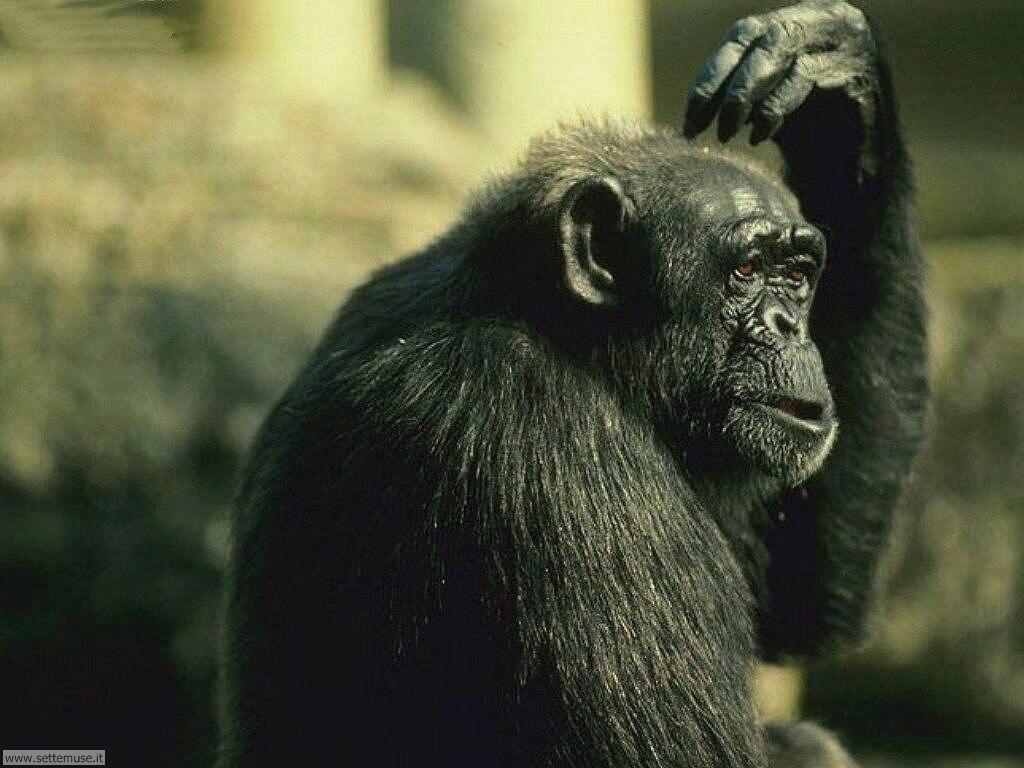 Foto di Scimmie 023