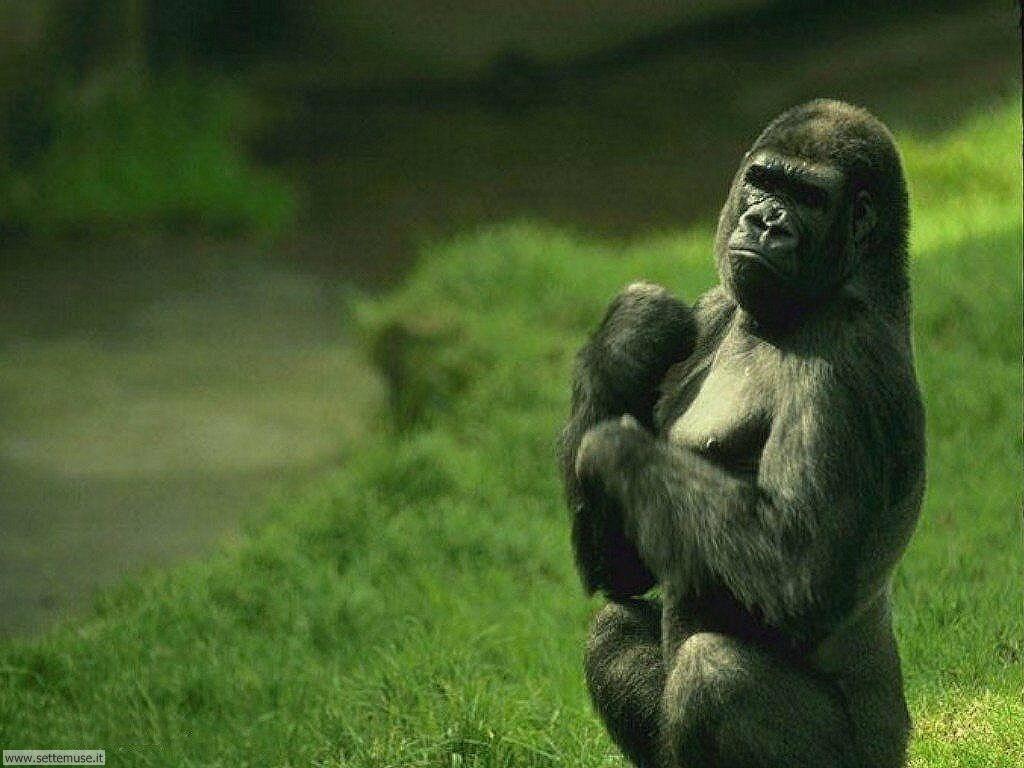 Foto di Scimmie 028