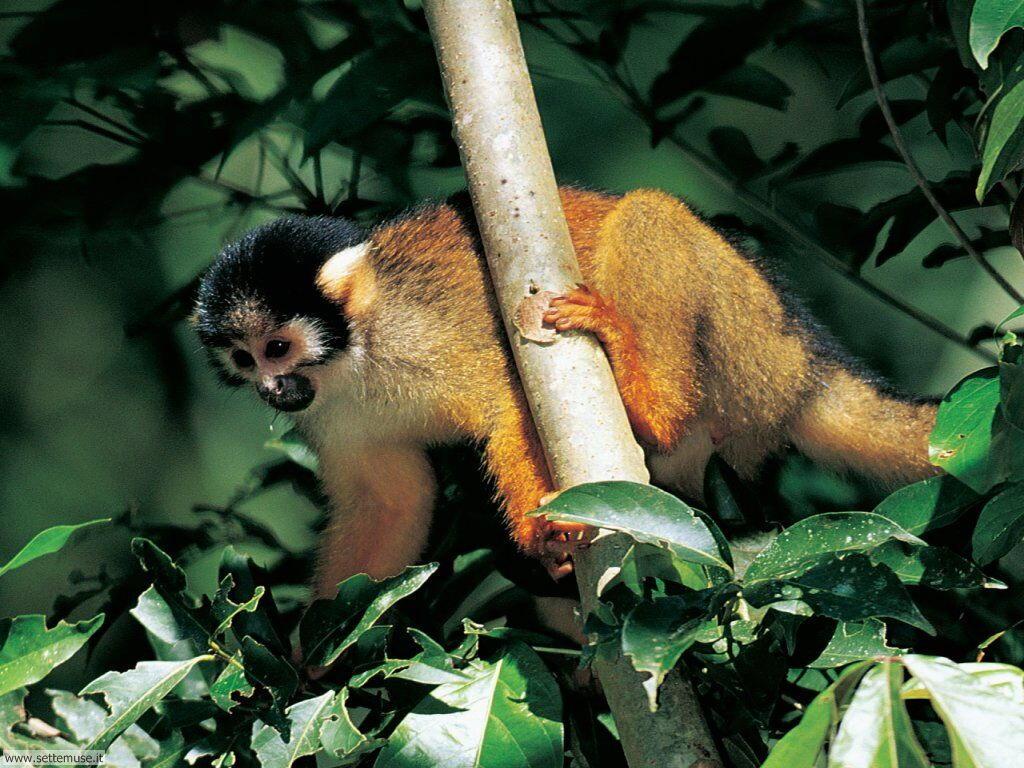 Foto di Scimmie scimpanze 030