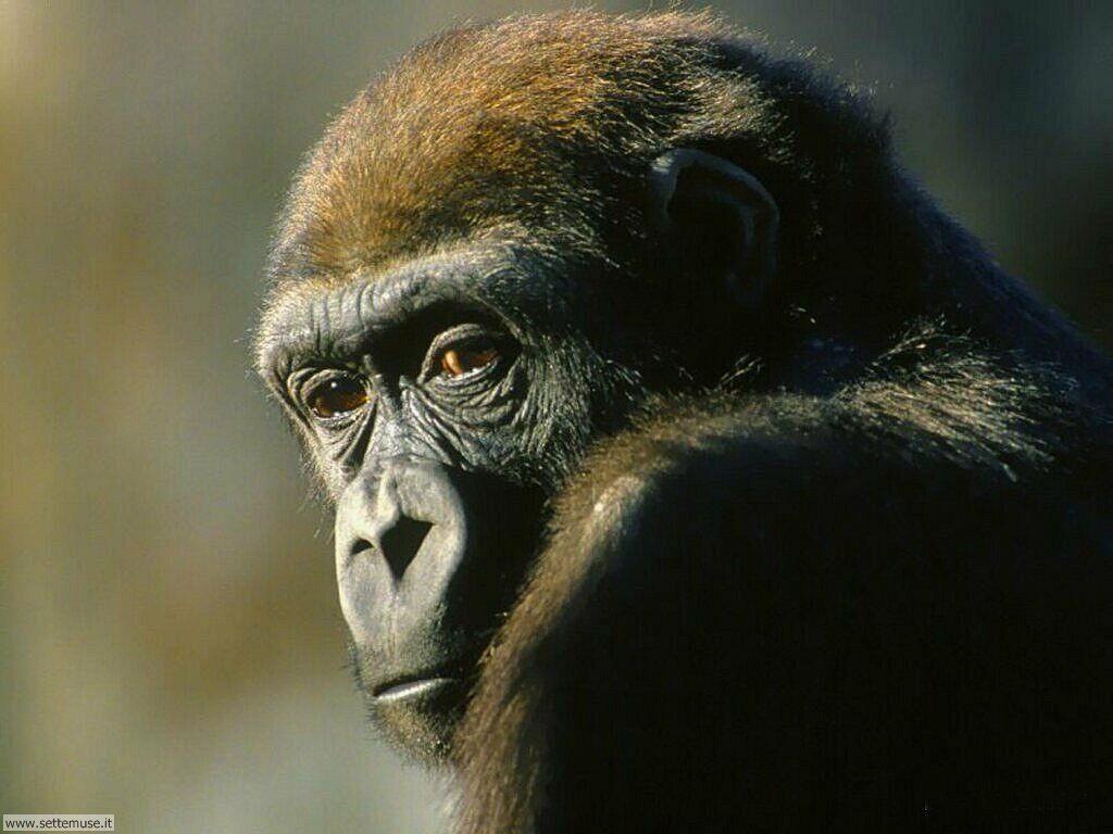 Foto di Scimmie 032
