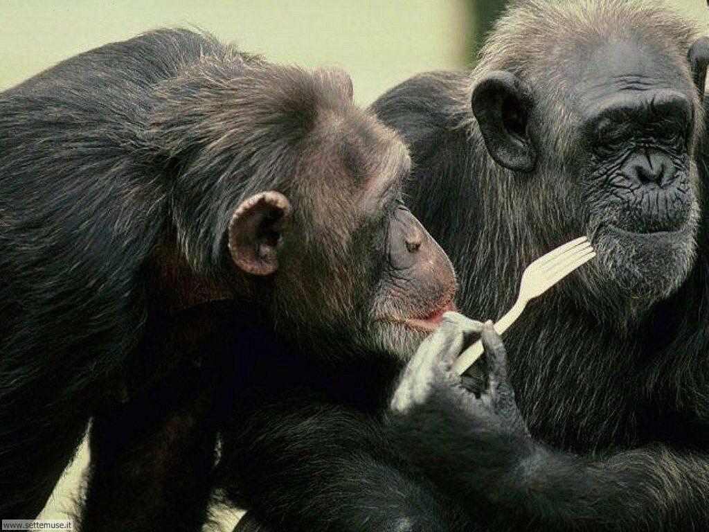 Foto di Scimmie 034