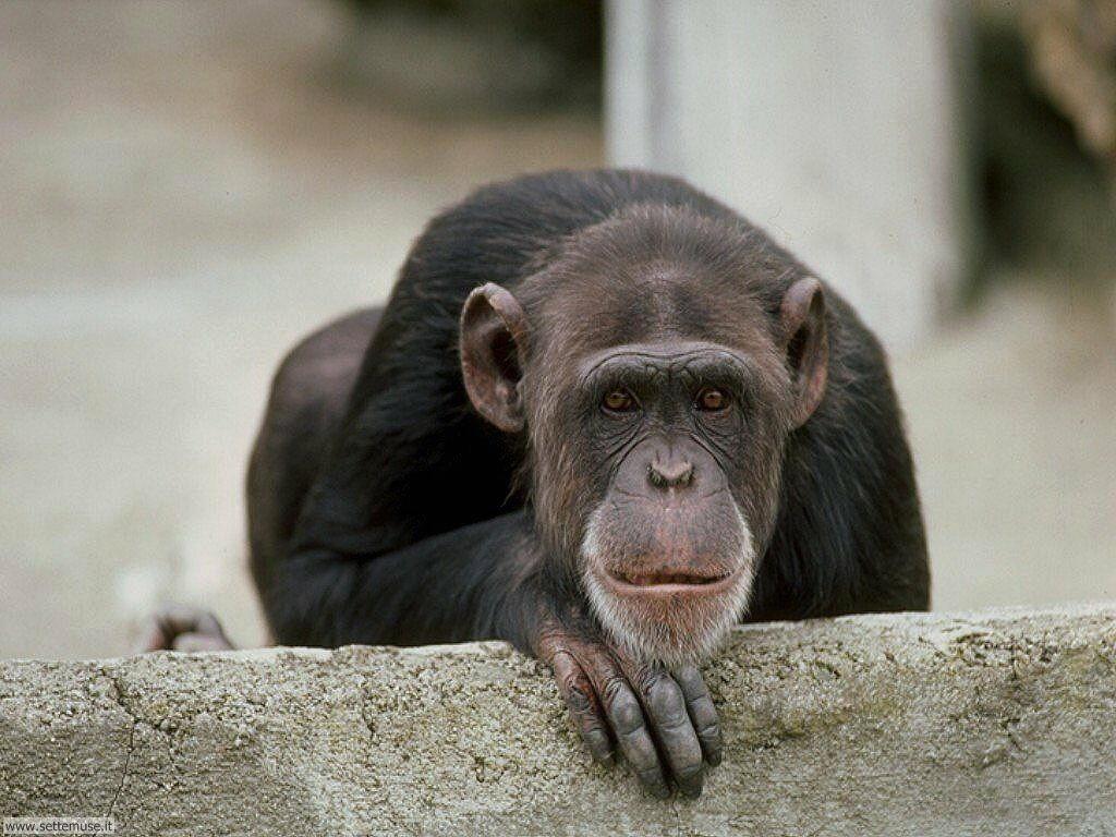Foto di Scimmie 036