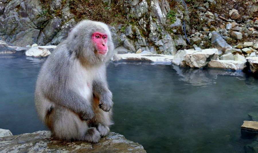 Foto di Scimmie scimpanze 069