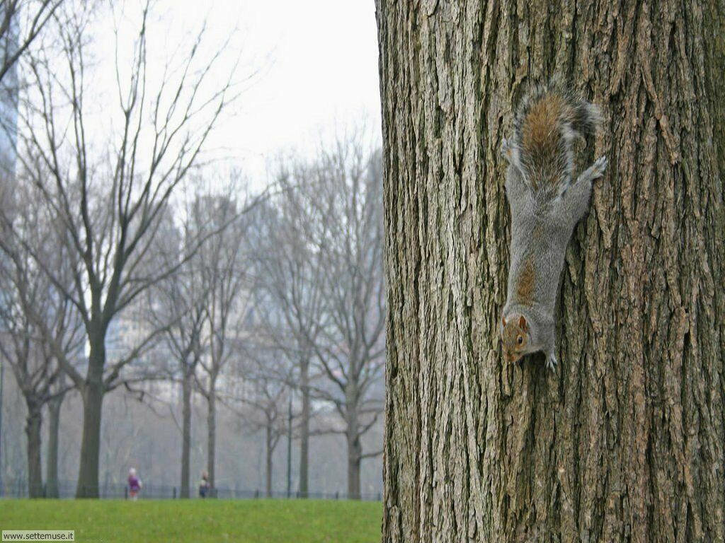 scoiattoli 1