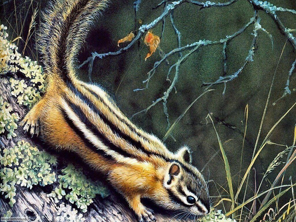 scoiattoli 3