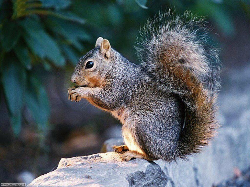 scoiattoli 6