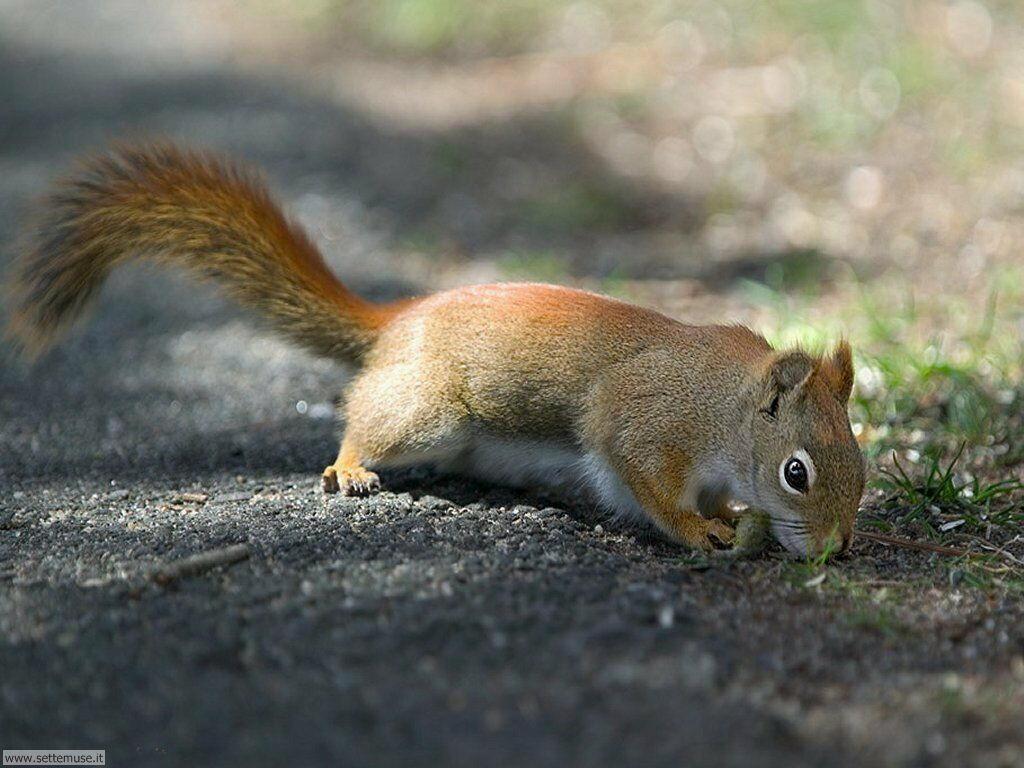 scoiattoli 7
