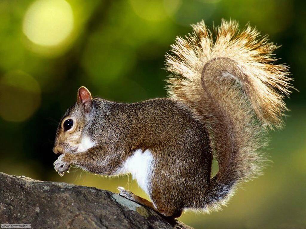 scoiattoli 9
