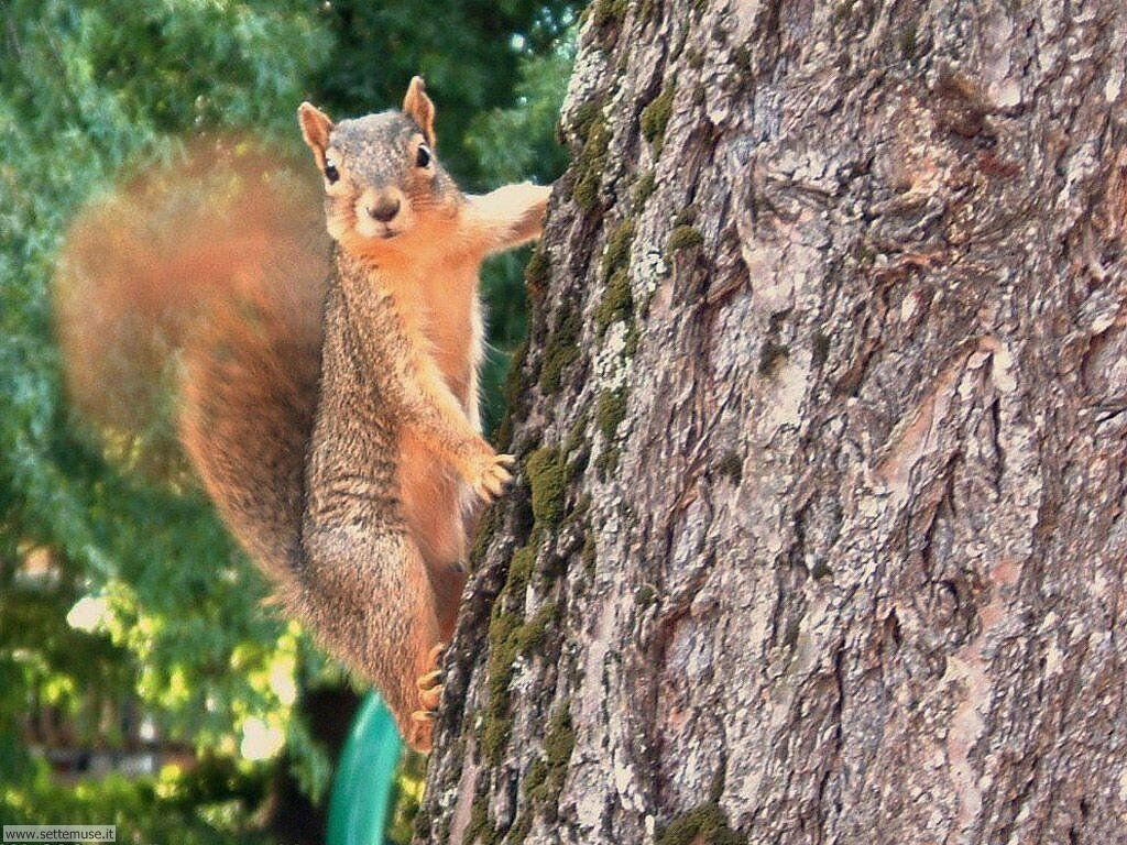 scoiattoli 10