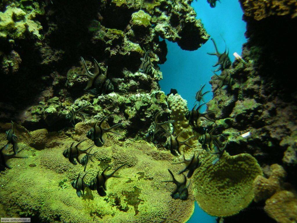 Pin sfondo di acquario on pinterest for Sfondi animati pesci
