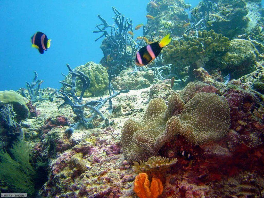 Foto acquari per sfondi pc for Sfondi pesci tropicali