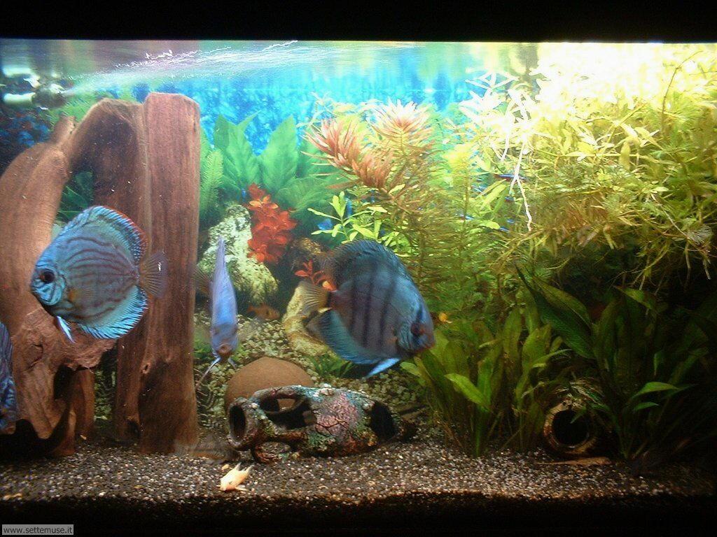 pesci/acquari/acquari_022.jpg