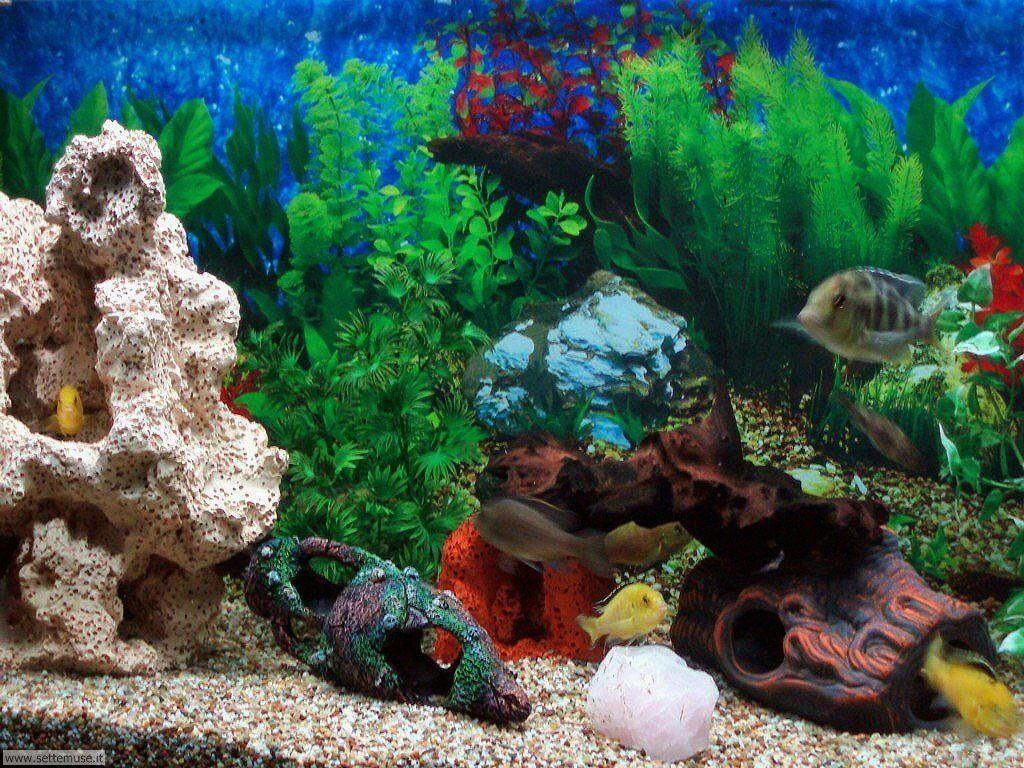 pesci/acquari/acquari_023.jpg