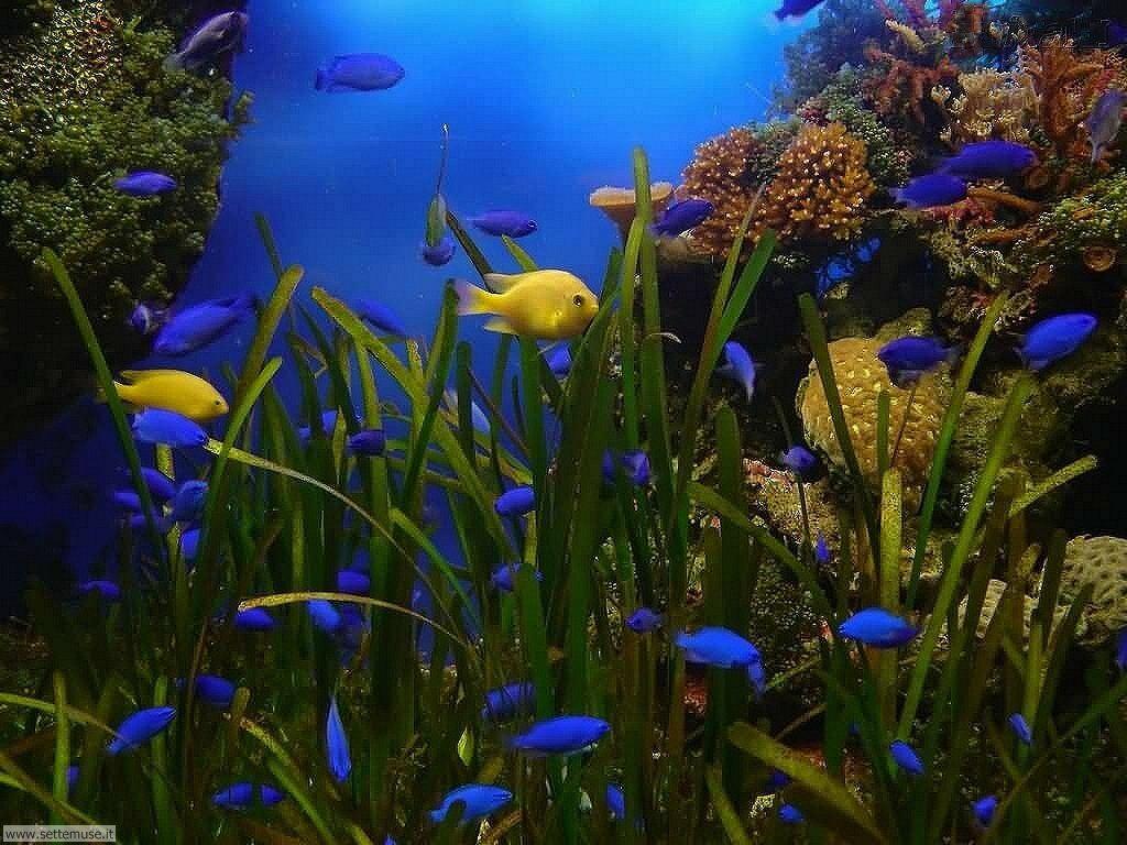 pesci/acquari/acquari_024.jpg