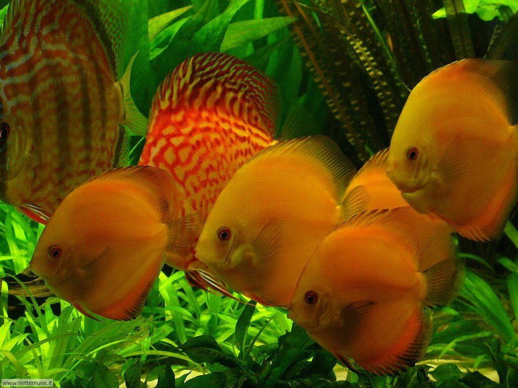 pesci/acquari/acquari_026.jpg