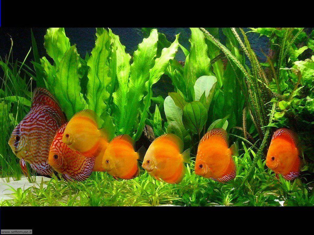 pesci/acquari/acquari_027.jpg