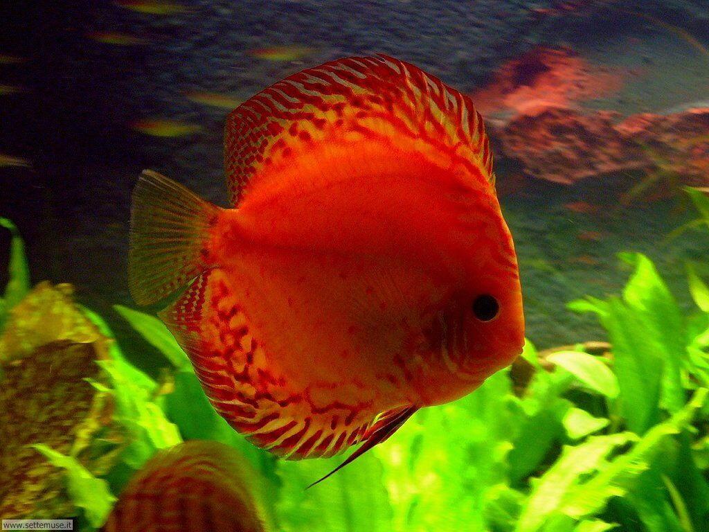 Foto acquari per sfondi pc for Cibo per pesci tropicali