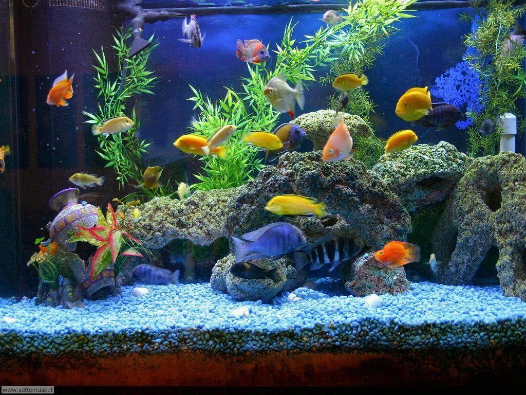 pesci/acquari/acquari_029.jpg
