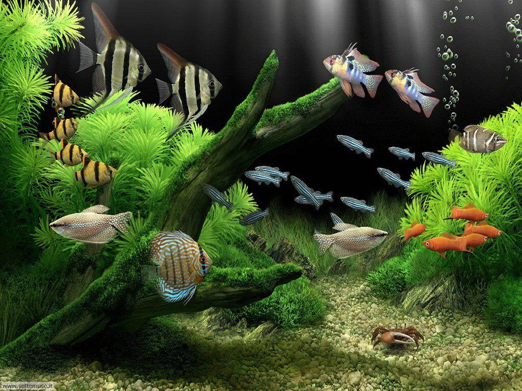 pesci/acquari/acquari_030.jpg