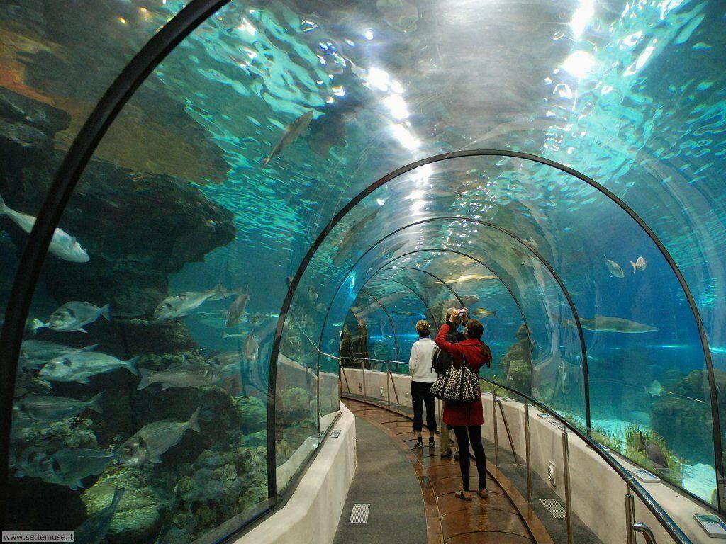 pesci/acquari/acquari_031.jpg