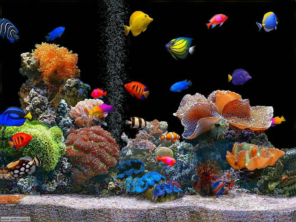 Sfondo desktop acquario casamia idea di immagine for Sfondi animati pesci