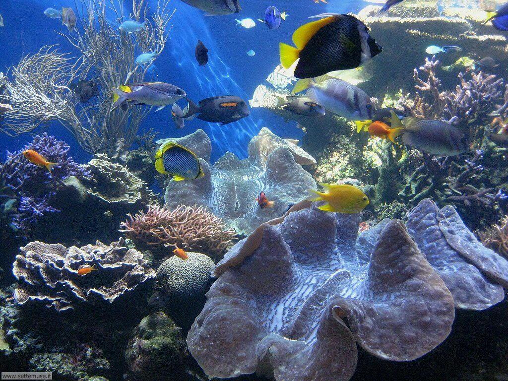 pesci/acquari/acquari_035.jpg