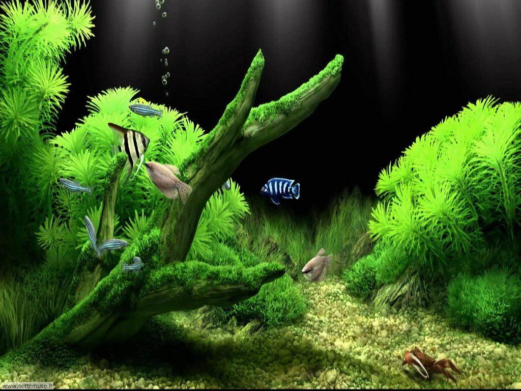 pesci/acquari/acquari_037.jpg