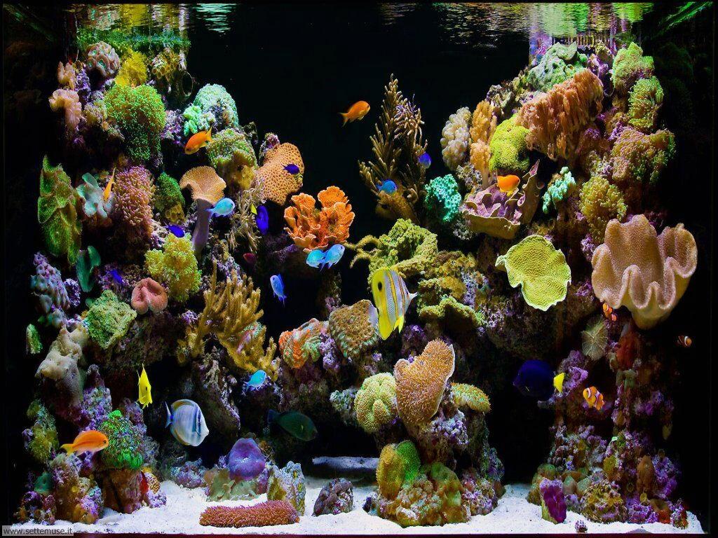 pesci/acquari/acquari_038.jpg