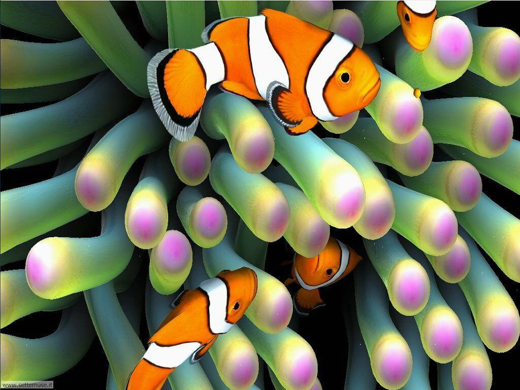 pesci/acquari/acquari_039.jpg