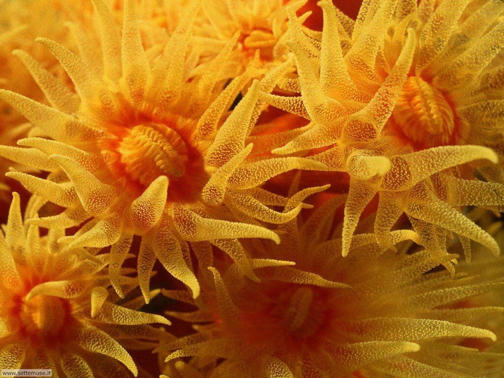 Sfondi anemoni e policheti 001