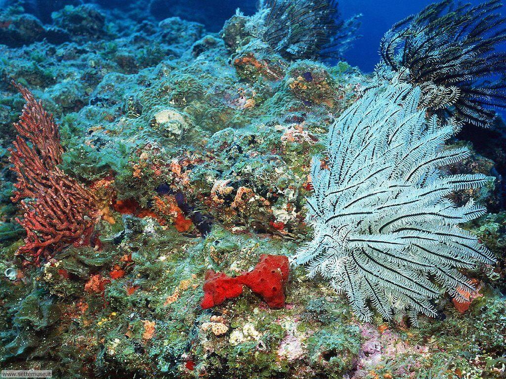 foto di anemoni di mare e policheti per sfondi