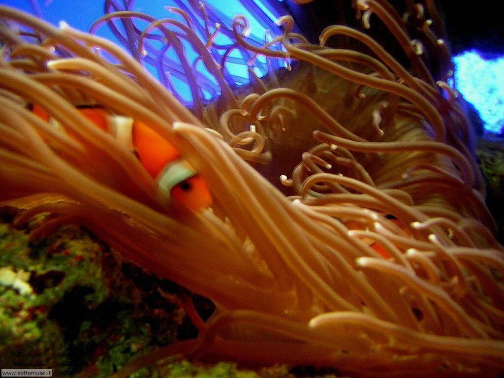 Sfondi anemoni e policheti 018