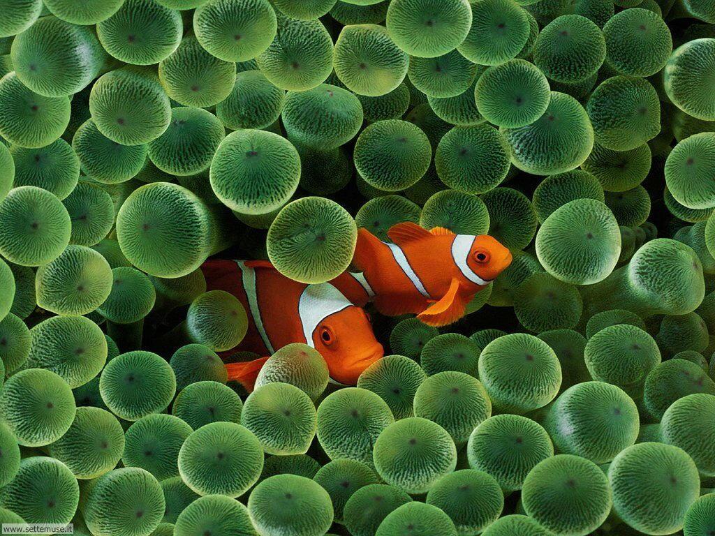 Foto sfondi della Barriera corallina 001
