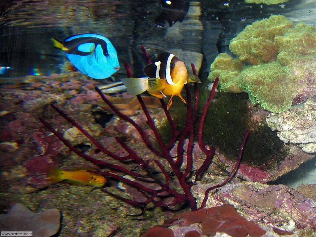Foto sfondi della Barriera corallina 002