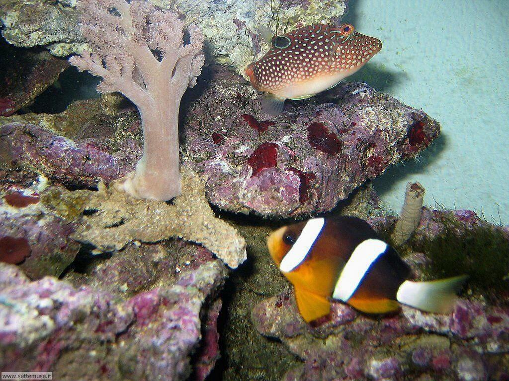 Foto sfondi della Barriera corallina 003