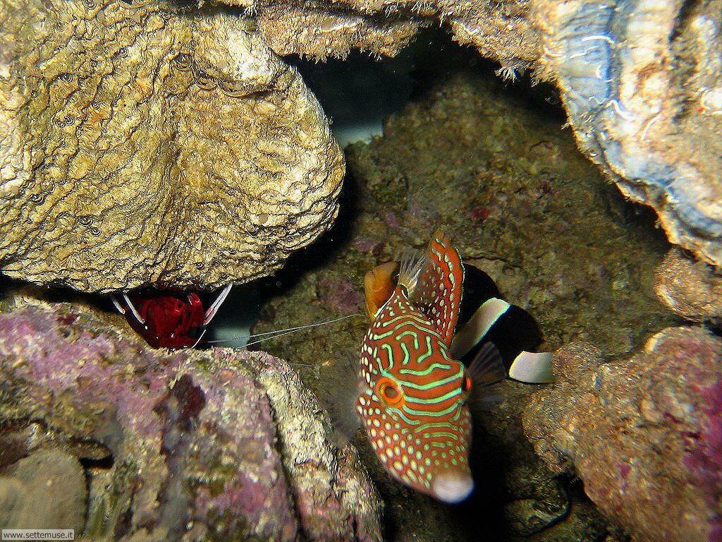 Foto sfondi della Barriera corallina 005