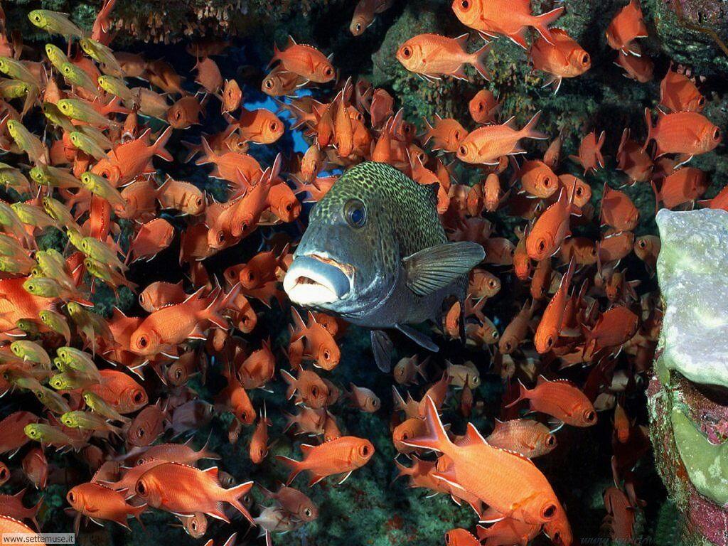 Foto sfondi della Barriera corallina 006