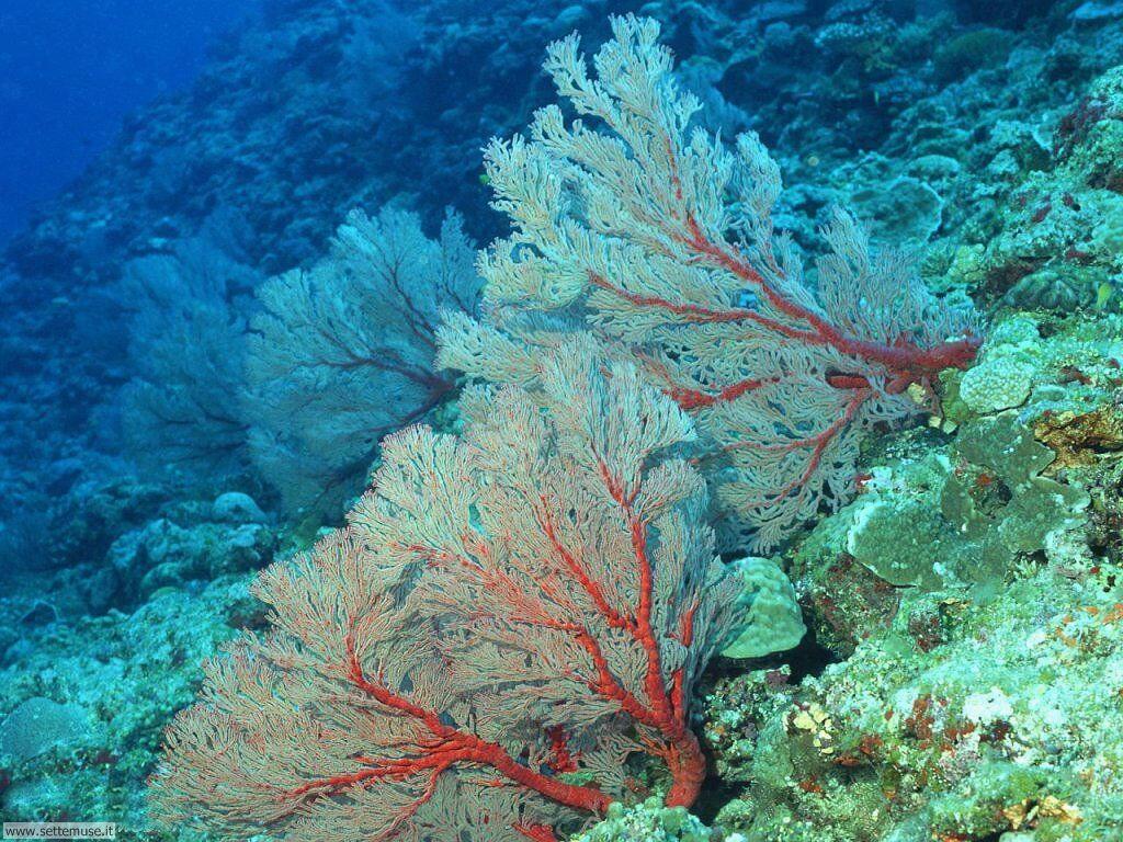 Foto sfondi della Barriera corallina 007