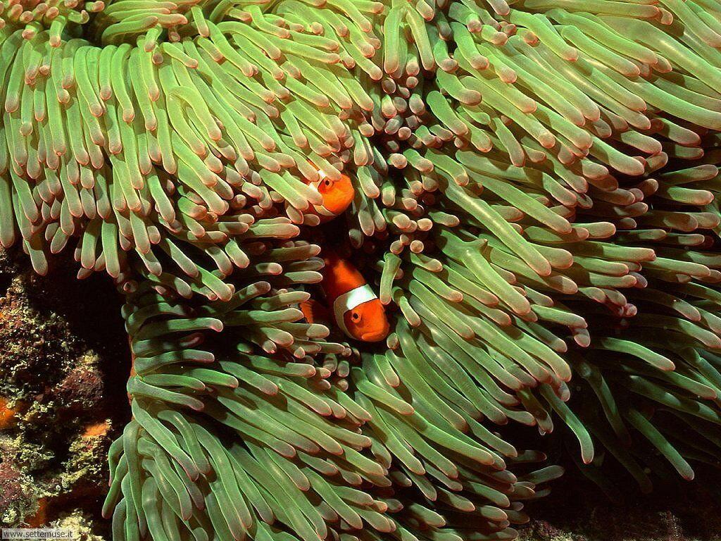 Foto sfondi della Barriera corallina 011