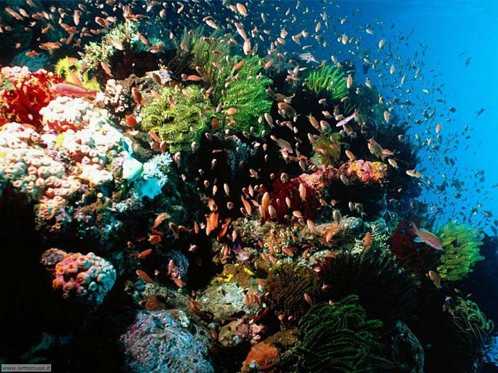 Foto sfondi della Barriera corallina 015