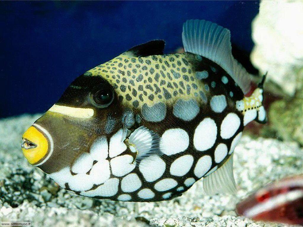 Foto sfondi della Barriera corallina 016