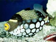 Foto sfondi barriera corallina