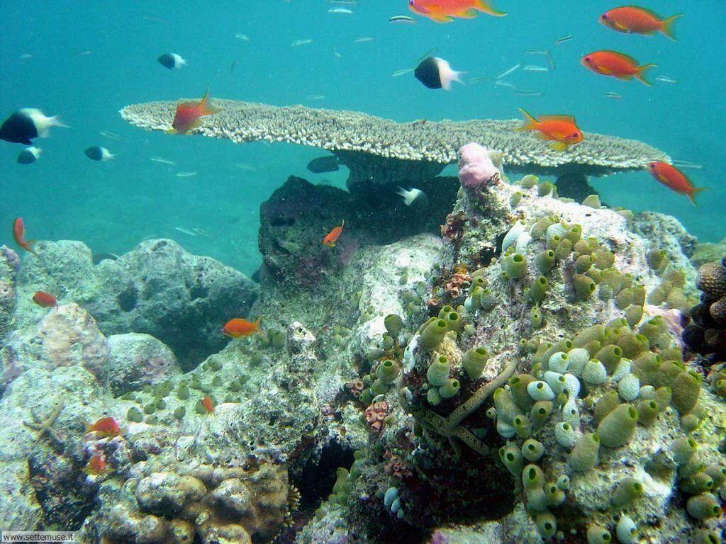 Foto sfondi della Barriera corallina 019