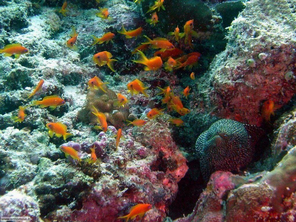Foto sfondi della Barriera corallina 020