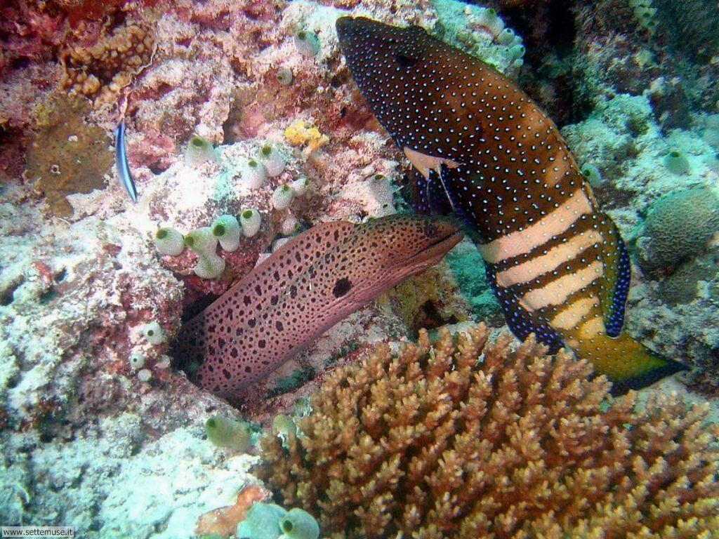 Foto sfondi della Barriera corallina 021