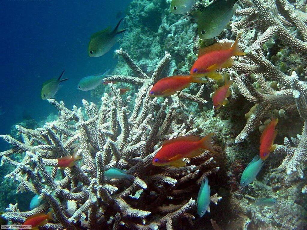 Foto sfondi della Barriera corallina 022